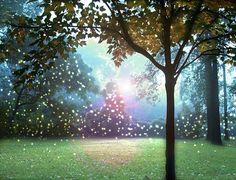 Catching Fireflies Art Print 8x10  Silhouette by donnageissler, $30.00