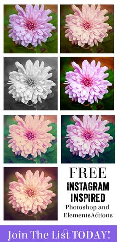 Free Instagram Inspired Actions Photoshop Elements Actions, Photoshop Tips, Free Instagram, Couple Pictures, Inspired, Photography, Art, Married Couple Photos, Art Background