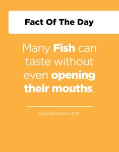 Many Fish can taste without even opening their mouths.