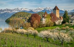 Spring in Spiez - One of the most beautiful seasons of the year in the Berner Oberland in Switzerland. Seasons Of The Year, City Architecture, Switzerland, Skyscraper, Most Beautiful, Scenery, Nyc, Abstract, Instagram