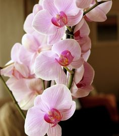 the first man to bring my orchids without knowing how much i love them....is the man i'm going to marry <3