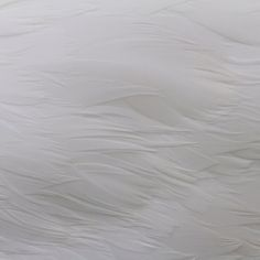 23 close up pictures of the skin of exotic animals: Swan skin