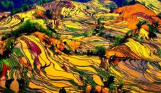 "Guilin rice terraces, Longji, China  Located in southern China, near Vietnam, Longji terraced rice fields cover an area of ​​almost 20,000 hectares and rising to a height of 3,600 feet. These fields, nicknamed ""At the ridge Dragon"" because of their similarity with weights, first appeared in the area around 1300 BC and at any time of the year they are painted in different colors depending on the life cycle of rice which are grown here."