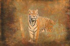 Neu in meiner Galerie bei OhMyPrints: Tiger Art