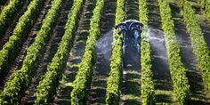 Selon le ministère de l'agriculture, les agriculteurs ont consommé 9 % de plus de produits phytosanitaires en2014. Le nombre de traitements est de l'ordre de 2,7 sur les choux-fleurs, 12 pour la tomate, 35 sur les pommes.