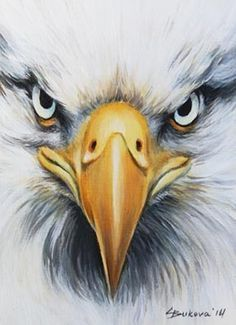 Image result for eagle face drawing