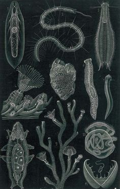 fresh water aquatic microorganisms, by Ernst Haeckel, 1923