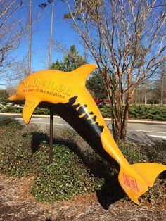 The Noblemen Dolphin at Virginia Aquarium