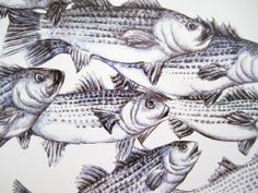 Fish Art Print  Striped Bass  Ink Drawing  by Michelebuttons, $15.00