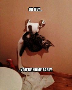 Brilliant... Funny Cat Picture With Captions #visit