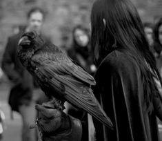 Severus Snape and Skullduggery :)