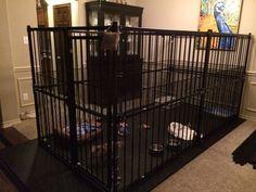 Mini Pig Indoor Housing