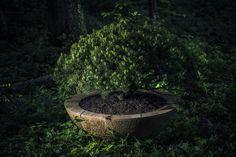 HOLZ GEFÄSSE Aus einem Stamm, von Hand gefertigt. Oberfläche, Fertigung und Masse ganz nach Ihrem Wunsch. Holz – Natur Pur! Exterior Design, Plants, Patio, Wish, Timber Wood, Lawn And Garden, Home Exterior Design, Plant, House Exterior Design