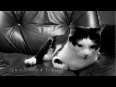 To: Henri le chat noir  Love, Anais Mittins.  Video in the likes of Henri, the esistential cat.  Very cute!