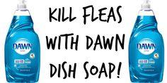 Kill Fleas with Dawn Dish Soap by Irresistiblepets.com