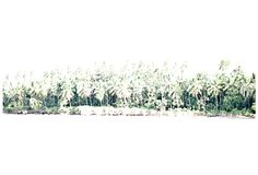 Chris Leidy Photography: Topside: Washed Out Palms #ChrisLeidyPhoto #ocean #earth #PalmTrees #ChrisLeidyPhotography #InteriorDesign #landscape#travel #photography #topside Website: http://www.leidyimages.com