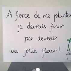 """Affiche citation """" a force de me planter ... """""""