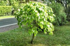 Arbre qui pousse vite : notre top 10 des arbres à croissance rapide Horticulture, Permaculture, Plants, Outdoor, Irrigation, Planters, Landscape, Nature, Garden Landscaping