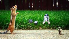 Um esquilo e Star Wars por Chris McVeigh | Nerd Da Hora