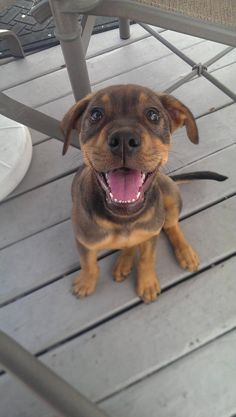 Puppy, smilin'