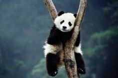 20 Cute & Funny Animal Sleeping Positions (cute animals funny, sleeping animals) - ODDEE