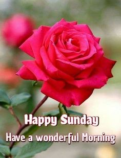 Good Morning Happy Sunday, Daily Inspiration, Rose, Flowers, Bonjour, Pink, Roses, Royal Icing Flowers, Flower