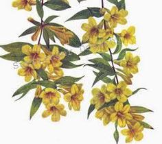 Image result for vintage jasmine