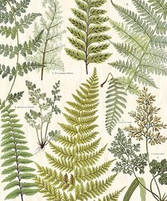 Herbarium Green Wall Mural Give your walls a fresh look with this vintage botanical mural. Fern Wallpaper, Botanical Wallpaper, Colorful Wallpaper, Pattern Wallpaper, Photo Mural, Photo Wall Collage, Picture Wall, Hawaiian Party Decorations, Terrazo