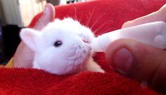 Die kleinste Babyflasche der Welt  #Flasche, #Kaninchen #Tiere