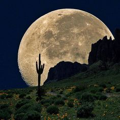 'Coyote Moon' by Dusty Pixel [Photoshopped full moon + Superstition Mountains, AZ! Moon Moon, Sun Moon Stars, Blue Moon, Moon Rise, Moon Phases, Beautiful Moon, Beautiful World, Beautiful Flowers, Coyote Moon