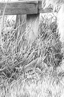 """Realistic Drawing Techniques Use of Negative Drawing in Art The title of this article is really too specific as the techniques described here apply as much to the drawing of hair as to grass. This is also an introduction to the use of """"negative"""" drawing Graphite Drawings, Pencil Art Drawings, Realistic Drawings, Love Drawings, Art Drawings Sketches, Landscape Tattoo, Landscape Drawings, Pencil Drawing Tutorials, Art Tutorials"""