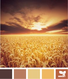 Harvested hues color paint color inspiration. Ready to have your home painted by a professional? Contact www.paintpartner.com
