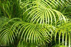Dívány - lájfhekk - 10 növény, melynek a NASA szerint a hálódban lenne a helye Nasa, Nature, Plant Leaves, Plants, Gardening, Random, Decor, Soothing Colors, Naturaleza