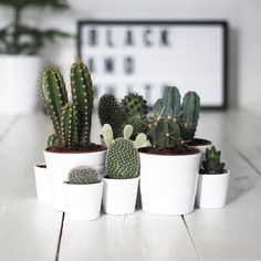 Cute and decorative arrangement of geometric cactus plants in white pots. Fantastic for decorating any space in an original way. (Source: Guia Para Decorar)