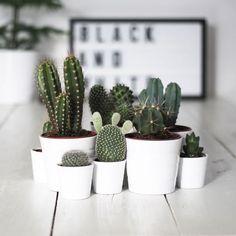 Ideias para decorar com plantas!
