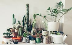 pots, teapots and mugs as plant homes
