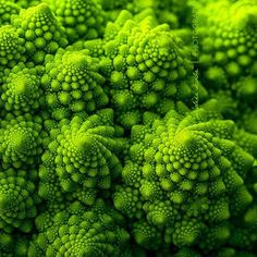Plant growth is governed by the Fibonacci sequence, which can be understood as a law of accumulation. The role of the Fibonacci sequence in the growth of plants is a intriguing example of the unifying order behind all creation. These patterns exist at all levels and permeate the universe, reminding us that the same swirling …