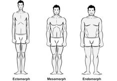 Bodybuilding body types are broken down into 3 categories. Endomorph, ectomorph, and mesomorph. Which of the 3 body types are you? Find out here. Gain Weight For Women, Diet Plans To Lose Weight, How To Lose Weight Fast, Fitness Diet, Mens Fitness, Fitness Motivation, Health Fitness, Fitness Expert, Ectomorph Workout