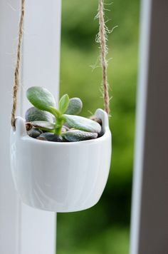 9 Reasons Succulents Aren't Going Away Anytime Soon: Anyone else obsessed with succulents — still?
