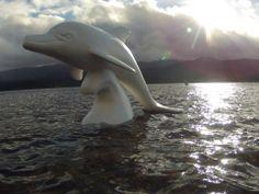 Wild Dolphins, Aberdeen