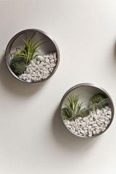 Magnetic Mason Jar Mini Terrariums