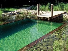 piscine-naturelle-main-2372816.jpg 498 × 374 pixels