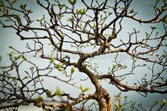 Bonsai Tree Photo Fine Art Photography by PatrickRabbatPhotos