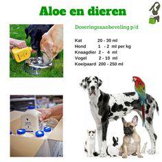Forever Living Aloe Vera, Forever Aloe, Forever Living Products, Believe, Feelings, Health, Food, Animals, Forever Living Distributor