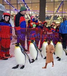 Mall of Egypt opened with a lot of Penguins   . . . #funny #funnyaf #funnyshit #memes #lol #savage #meme #lmao #jokes #hilarious #comedy #nochill #dankmemes #dank #funnyvideos #fun #funnymemes #followme #cool #smile #like4like #laugh #humor #instagood #friends #love #wtf #laughing #funný #happy