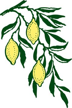 How to lighten skin with lemon, honey, milk, tumeric and yogurt. Great tips that you can easily do from home to lighten your skin naturally without any chemicals Limoncello, Lemon Clipart, Lighten Skin, Picture Logo, Time Tattoos, Tree Patterns, Trendy Tree, Free Graphics, Pictures To Draw