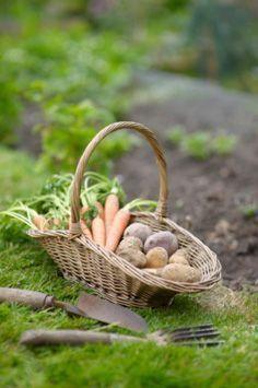 farm fresh veggies