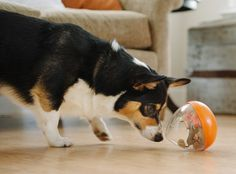 The P.L.A.Y. Wobble Ball Toy will provide hours of interactive fun and enrichment for your dog. Simply put a treat in and reward your dog for their persistence and intelligence!