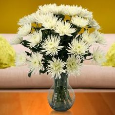 Costco: White Chrysanthemum Spider Mums-80 Stems
