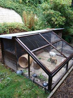 Rabbit paradise, outdoor enclosure with sandbox - Kaninchen - Animal Rabbit Cages Outdoor, Outdoor Rabbit Hutch, Indoor Rabbit, Rabbit Farm, House Rabbit, Pet Rabbit, Rabbit Enclosure, Bunny Hutch, Bunny Cages